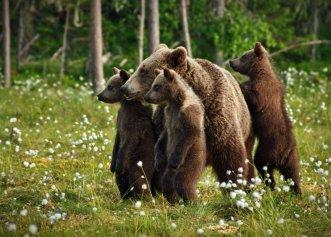 Îți plac ursuleții? Poți adopta de la distanță unul. Uite ce trebuie să faci