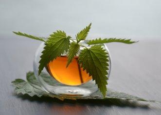 Planta pe care mulți o ignorăm, dar are numeroase beneficii pentru sănătate! Ajută chiar și la scăderea tensiunii!