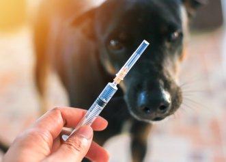 O nouă etapă în lupta cu pandemia de COVID-19! Vaccinarea animalelor de companie, scenariu din ce în ce mai posibil