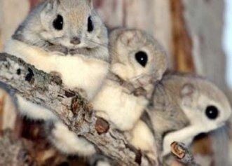 O veveriță gestantă nu a uitat sentimentul de siguranță de când a fost salvată! Ea s-a întors să aducă puii pe lume în același loc