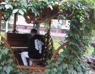 Cronicar în Oradea. Povestea florarului care a plantat un  …