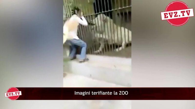 Video. Un îngrijitor de la o grădină zoo din Pakistan, la un pas să fie ucis de leu
